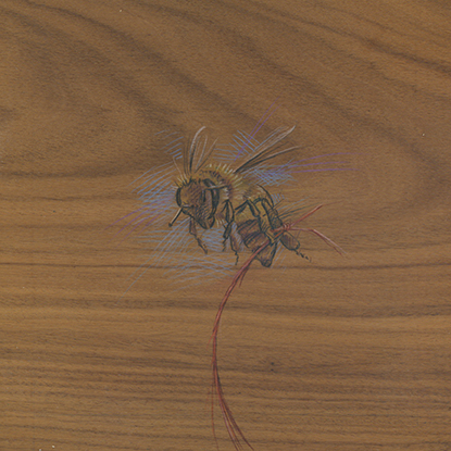 Colored pencil drawing on wood of a bee tethered by a red string